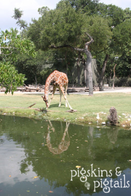 Things to do in Texas: Fort Worth Zoo