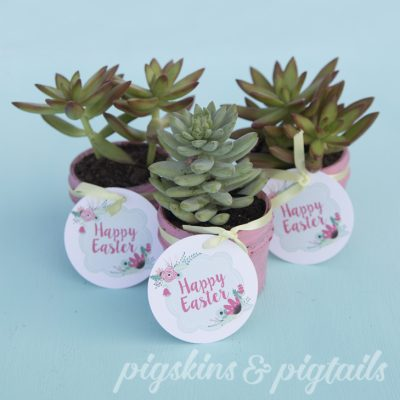 Succulent Gifts, Scavenger Hunts and More Easter Fun