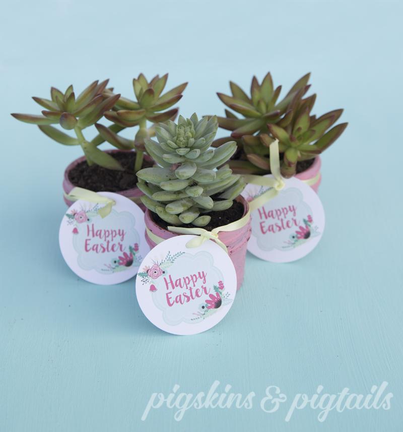 succulent-gift