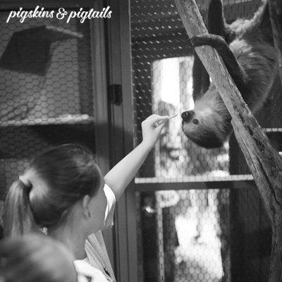 sloth birthday party austin aqurium