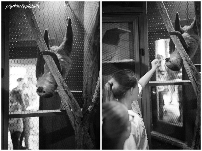 sloth experience austin texas aquarium interact