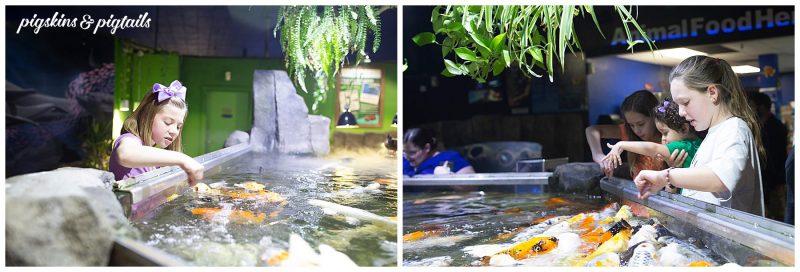 things to do austin aquarium fun